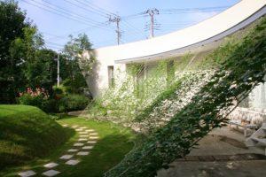 0708緑のカーテン01